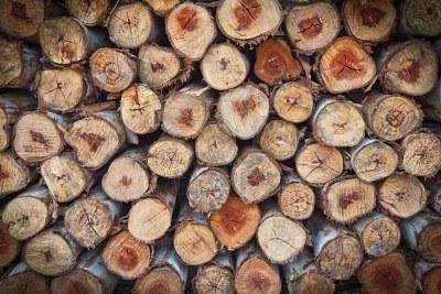 9511350-sfondo-di-tronchi-di-legna-da-ardere-di-eucalipto-secchi-tritato-accatastati-in-un-mucchio-di-ogni-a